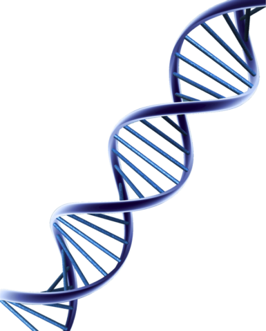 DNA strand 2